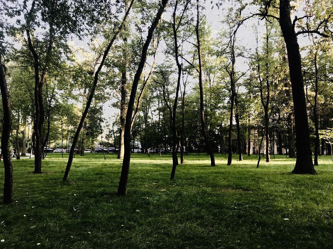Пікнік та шашлики на природі: найкращі місця для ідеального заміського відпочинку